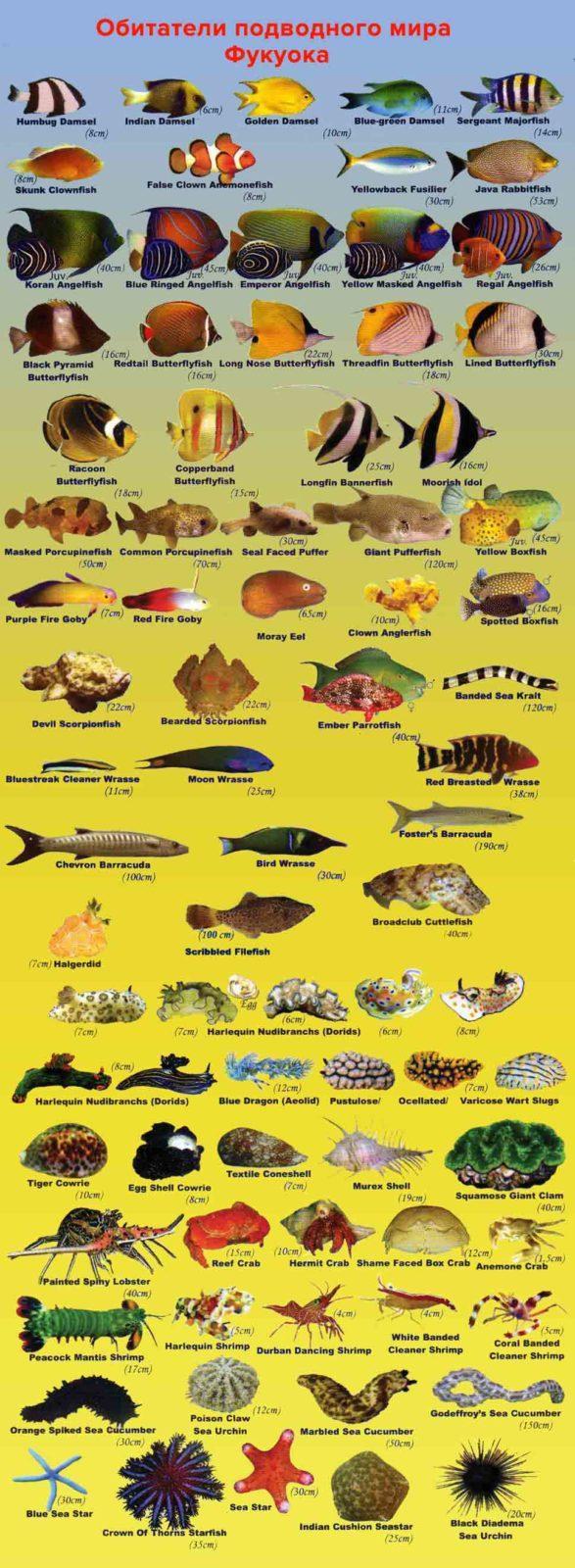 Обитатели подводного мира Фукуока